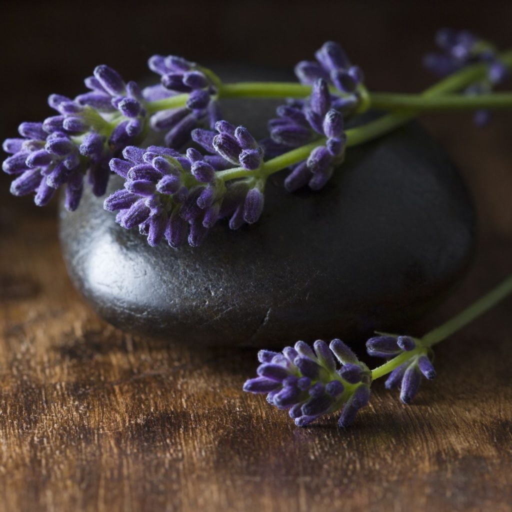 Lavender - Herbs for Protection Against Negative Energy
