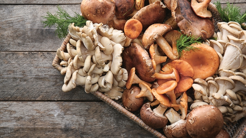 Medicinal Mushrooms - High Vibration Foods Raise Your Vibes with Diet Quickly