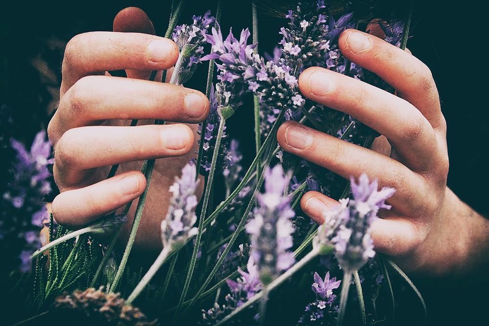 Health Benefits Lavender Essential Oil