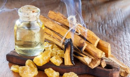 How to Burn Palo Santo