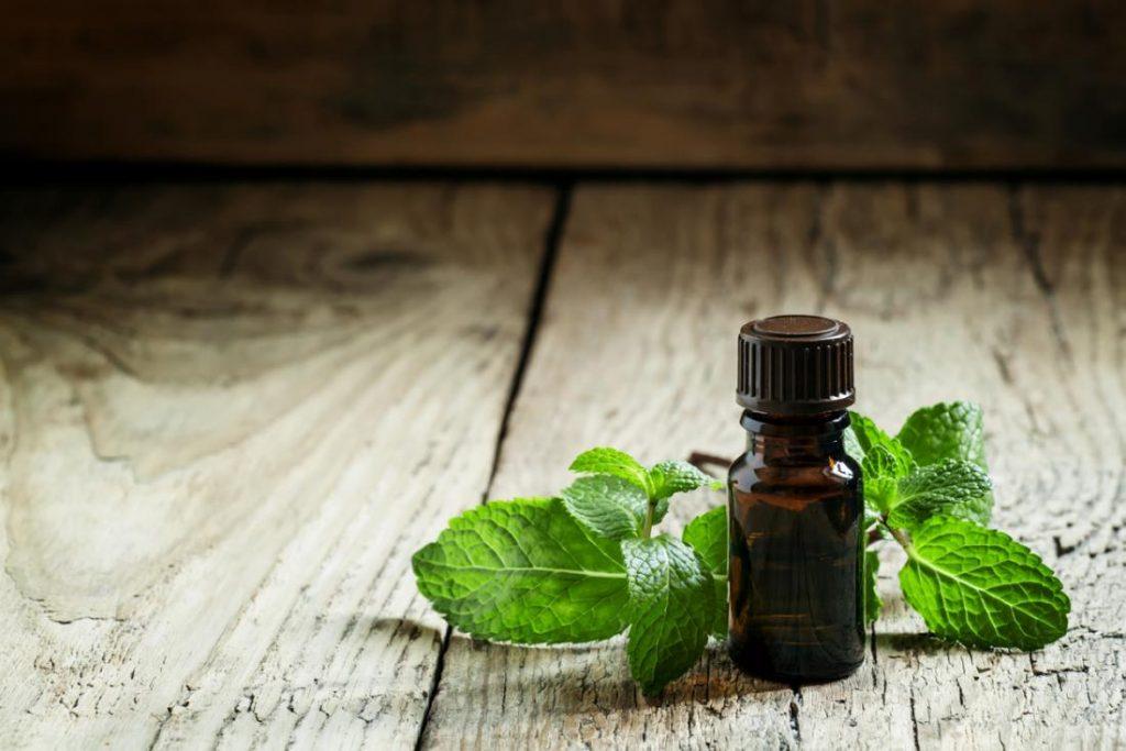 Best Essential Oil for Bug Bites